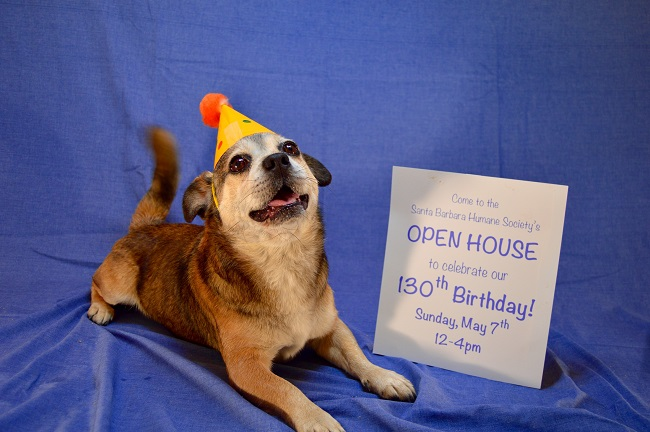 May 7 — Celebrate 130 Years of Service to Shelter Animals and the Community at Open House