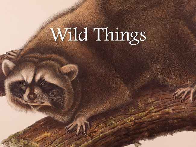 Through May — The Santa Barbara Museum of Natural History is where the Wild Things are