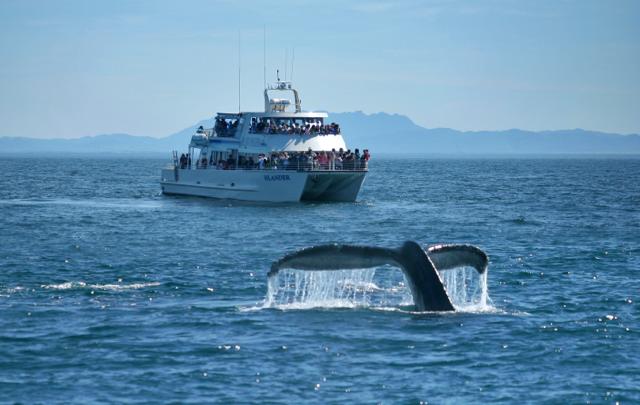 Whale Watching Season Begins in Oxnard